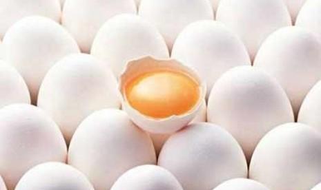 kuning-telur-ilustrasi-_120910170328-385